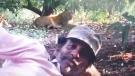 જુનાગઢ: સિંહથી માત્ર 20 ફૂટ દૂર સૂતેલા માણસનો વીડિયો સોશિયલ મીડિયામાં પર થયો  વાઇરલ