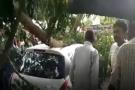 જામનગરની ખોડીયાર કોલોનીમાં વૃક્ષ ધરાશાયી થતાં કારના ફૂરચા ઉડાવી દીધા