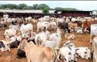 રાજકોટ બાપા સીતારામ ગૌશાળામાં 20થી 30 ગાયોના મોત